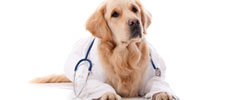 Pet Health coupons